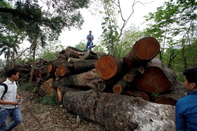 Ông Phan Đăng Long: Không lường được tình cảm của dân với cây