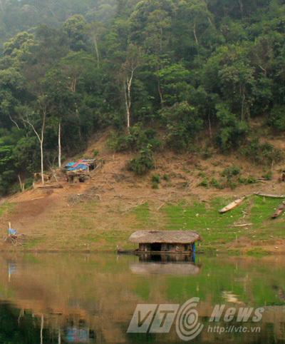 Phát hiện chấn động ở Tuyên Quang: Đàn hổ hoang dã sống cạnh dân