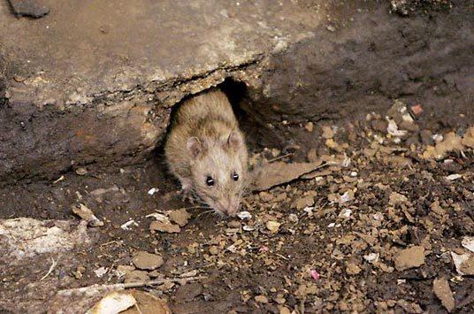 Động vật có thể phỏng đoán được động đất