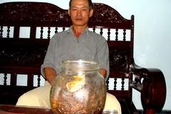 Ly kỳ củ sâm Việt Nam 800 tuổi không thể định giá
