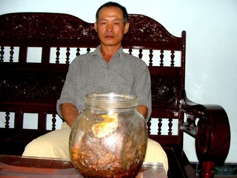 nhân-sâm, Lào-Cai, Hoàng-Liên-Sơn, ung-thư, Nguyễn-Hữu-Trọng, Trần-Ngọc-Lâm, sâm-quý, núi