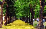 """Rơi nước mắt với hồi ức """"cây"""" của một người Hà Nội"""