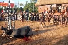 """Không phục dựng những lễ hội có nghi thức """"đâm, chém"""" động vật"""