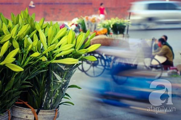Dịu dàng loa kèn tinh khôi trên phố Hà Nội gọi tháng Tư