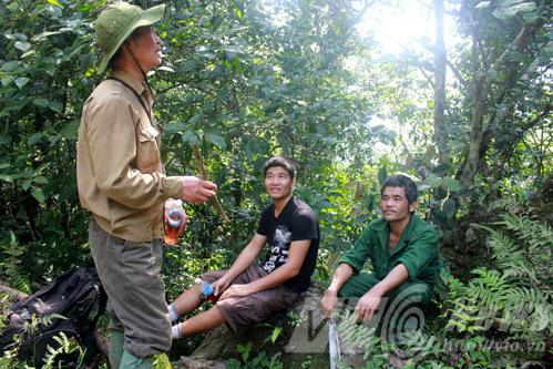 hổ dữ; Tuyên Quang