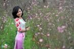 Những mùa hoa đẹp nao lòng ở Hà Nội