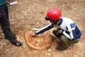 Trường học tự ý trảm cây cổ thụ chục năm tuổi