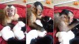 Khỉ con âu yếm chó sơ sinh như đồng loại