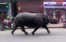 Tê giác rừng quậy phố, húc 7 người thương vong