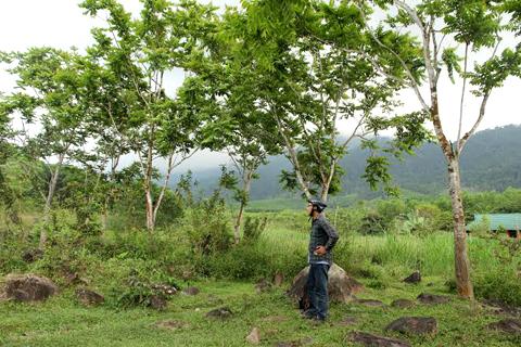Trà-My, thành-hoàng-làng, Làng-Mường, Quảng-Na, lập-nghiệp, vùng-đất-mới, lát-hoa, tỷ-đô