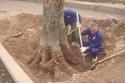 Thủ tướng yêu cầu HN khẩn trương thanh tra vụ chặt cây