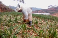 Mưa đá lốc xoáy tàn phá Đà Lạt, nông dân trắng tay