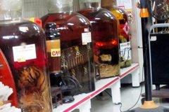 Đại gia chơi độc: Rượu bào thai hổ, gấu ngâm nguyên con