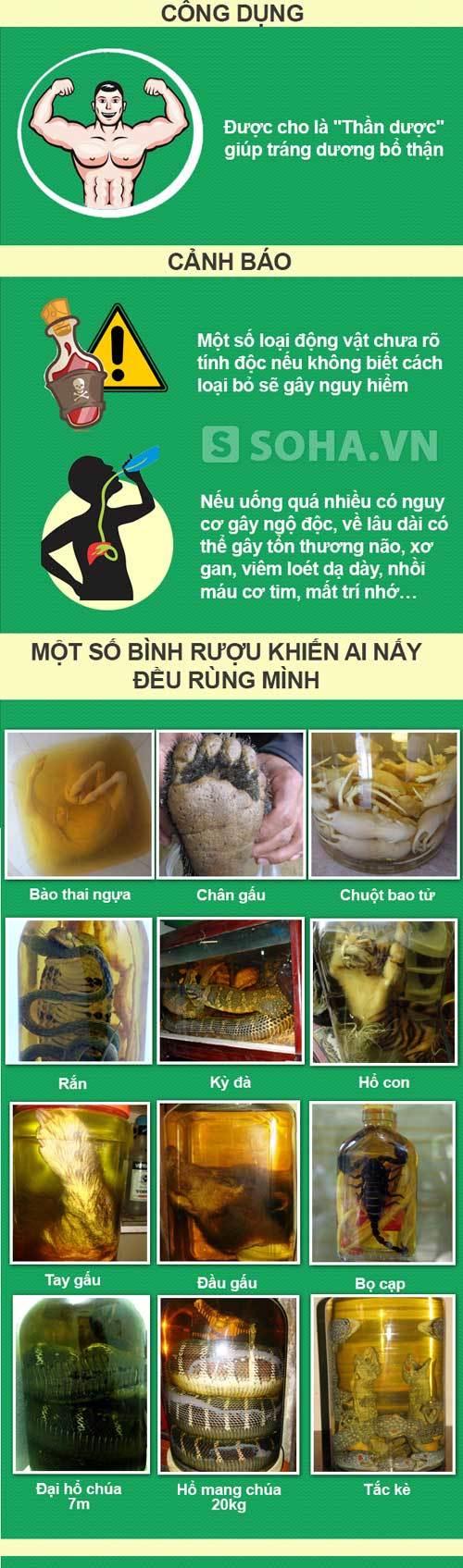Những bình rượu khủng, rùng rợn chỉ có ở Việt Nam