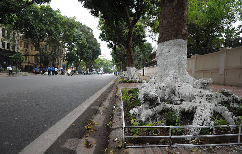 Trang hoàng đường hoa thứ 2 ở Thủ đô