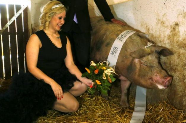 Xem lợn tranh ngôi nữ hoàng sắc đẹp
