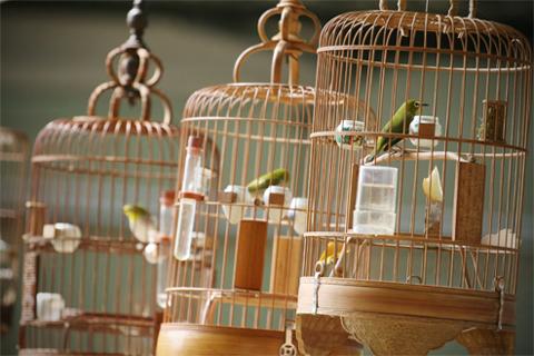 thú chơi chim, hội mê xe cổ, chó phốc, nuôi rồng đất, thú cưng, gà chọi