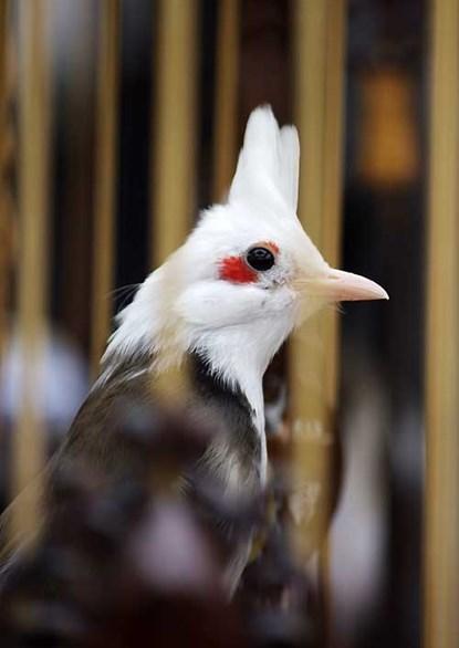 Rùng mình chơi chim, cây đột biến gen