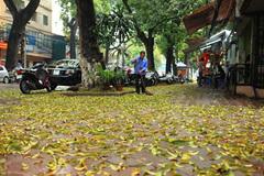 Lá vàng rụng trải thảm đường phố