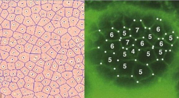 Các vòng tròn bí ẩn tiết lộ 'lớp da' của Trái đất?