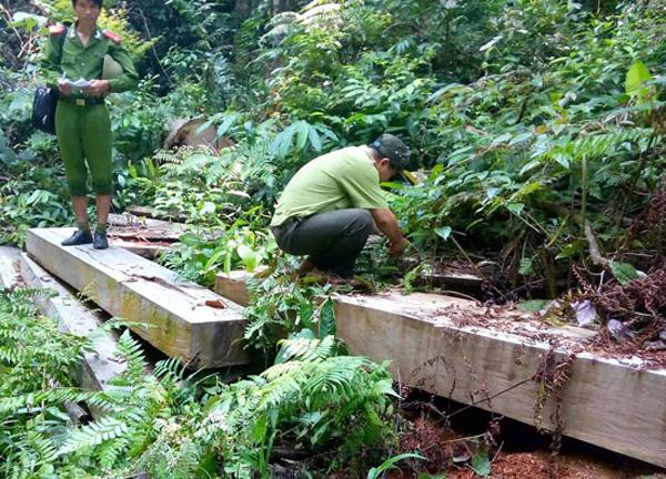bắt giam, đối tượng, phá rừng, Đà Nẵng