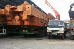 Hàng trăm xe gỗ ùn ứ ở Cửa khẩu Quốc tế Lao Bảo