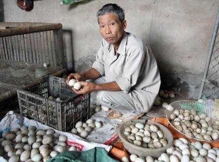 Trứng vịt 'chuyển màu' ở Hải Phòng