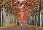 Choáng ngợp những con đường hoa đẹp nhất thế giới