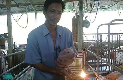 Nông dân cho lợn nghe nhạc Mr. Đàm để dễ đậu thai