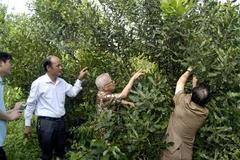 Bộ NN-PTNT ủng hộ thành lập Hiệp hội Mắc ca Việt Nam