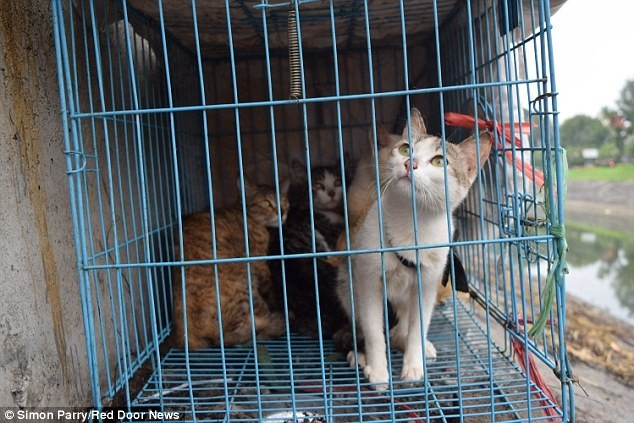 Một ngày trong quán 'tiểu hổ' tại Việt Nam lên báo Anh
