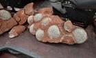 Trung Quốc: Tìm thấy 43 quả trứng khủng long hóa thạch dưới lòng đường