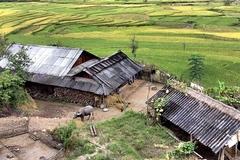Việt Nam không phản đối đưa amiăng trắng vào danh mục độc hại