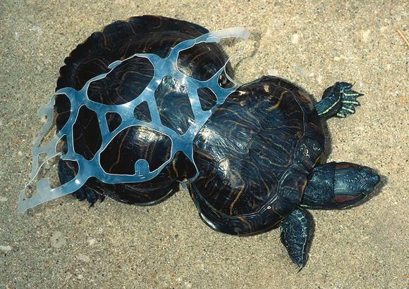 ô nhiễm môi trường, hình ảnh, thế giới, môi trường sống, nguy hại, rác thải, bảo vệ, Trái đất