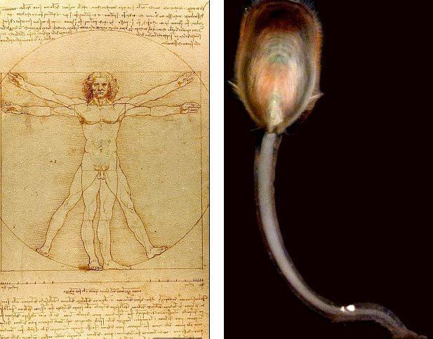 tổ tiên, loài người, sinh vật, xúc tu