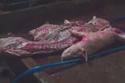 Lợn tiêm thuốc, gạo hóa chất: Bữa ăn rợn người
