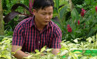 Chàng gàn Bến Tre: Bán lá cây thu 5 tỷ