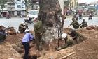Hà Nội chưa báo cáo Chính phủ vụ chặt cây xanh