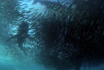 """Cảnh """"tận thế"""" ngoạn mục dưới biển"""