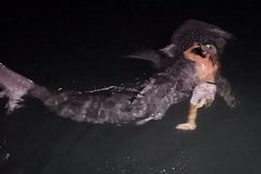 Choáng cảnh ngư dân tay không ôm ghì cá mập voi