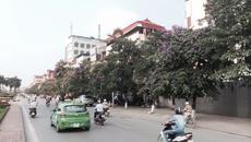 Sao Hà Nội không 'nhân rộng' con đường hoa bằng lăng?