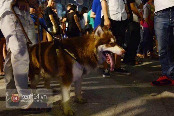 Cấm xe máy, chó ngàn đô nghênh ngang dạo phố đi bộ Nguyễn Huệ