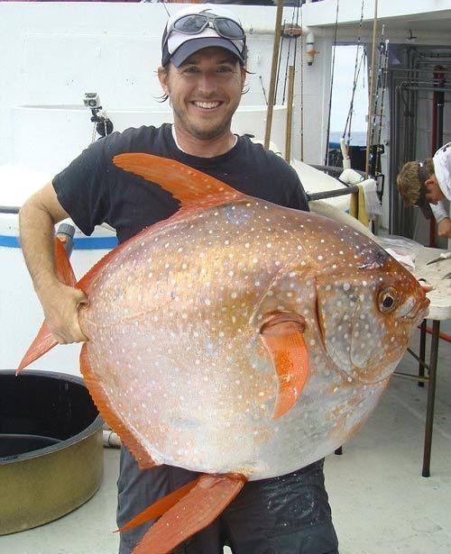 Cận cảnh loài cá máu nóng đầu tiên được phát hiện