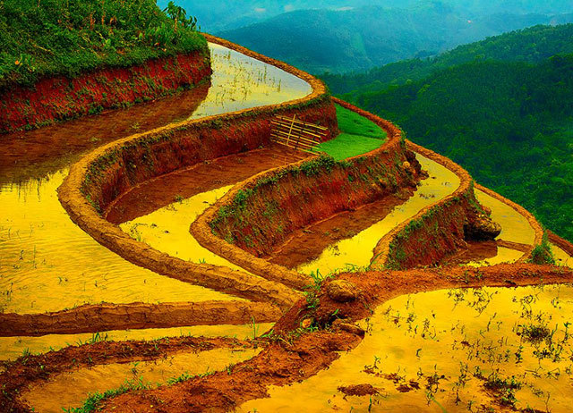 Tây Bắc, Hà Giang, Yên Bái, Sapa, ruộng bậc thang, mùa đổ nước