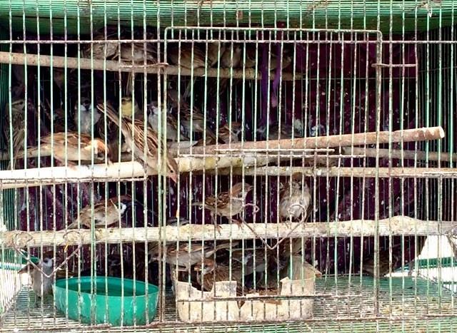 Tận diệt chim sẻ
