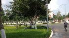 Khó tin: Một quận chi 18 tỷ để bảo dưỡng cây xanh