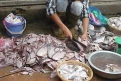 Cá ươn, cá thối tại chợ đầu mối hút khách vì giá rẻ