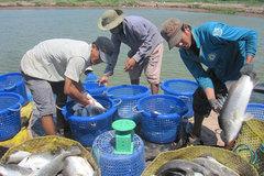 Lối thẳng đưa nông sản Việt ra quốc tế