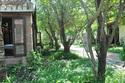 Báu vật bí ẩn trong vườn dâu Chăm cổ ngàn tuổi
