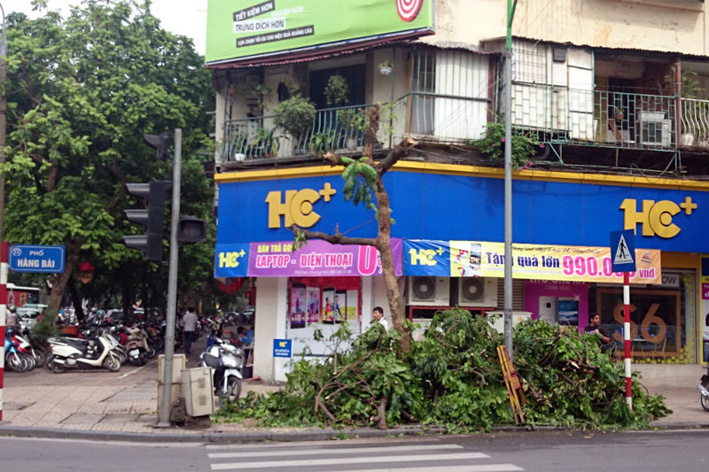 Hà Nội, cây xanh, hồ Hoàn Kiếm, bị cắt trụi